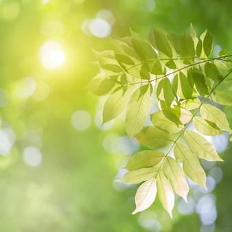 Nahaufnahmenaturansicht des grünen blattes auf unscharfem grünhintergrund