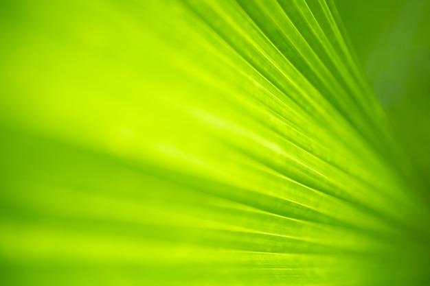 Nahaufnahmenaturansicht des grünen blattes und des unscharfen grüns