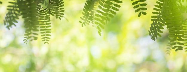 Nahaufnahmenaturansicht des grünen blattrahmens