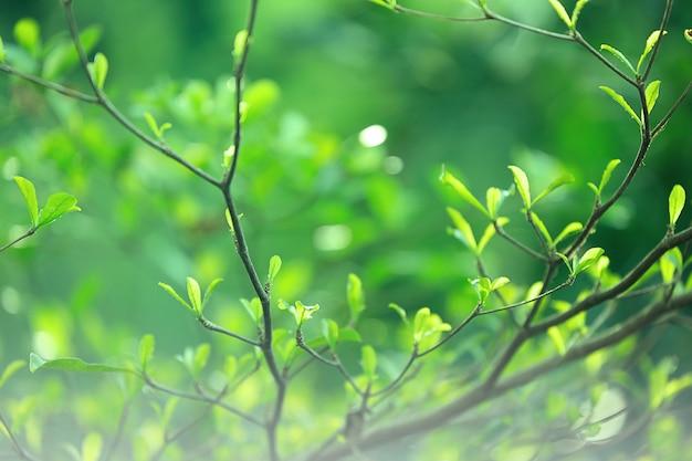 Nahaufnahmenaturgrün verlässt auf unscharfem grünhintergrund im garten.