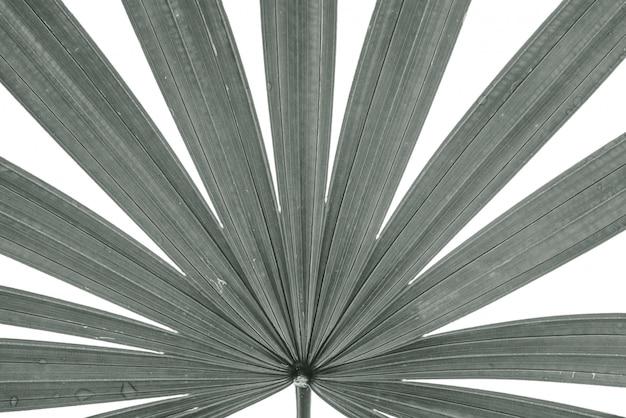 Nahaufnahmeoberfläche des blattes der palme