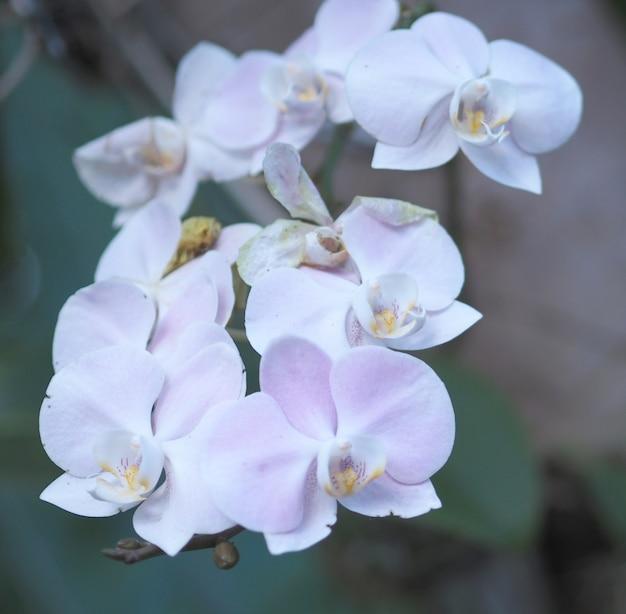 Nahaufnahmeorchideenblume im wintergartenhintergrund