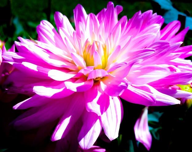 Nahaufnahmephotographie zeigt schöne rosa blumenblätter.