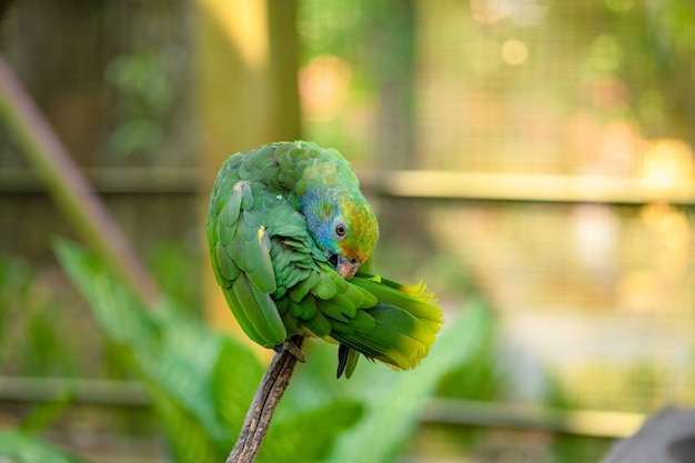 Nahaufnahmeporträt des grünen papageien. vogelpark, tierwelt