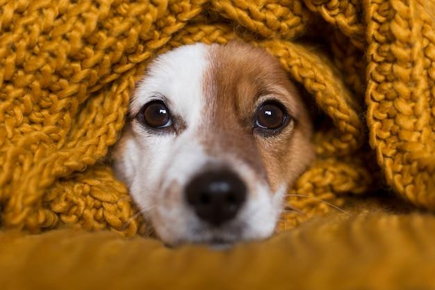 Nahaufnahmeporträt eines netten kleinen hundes, der auf bett sitzt