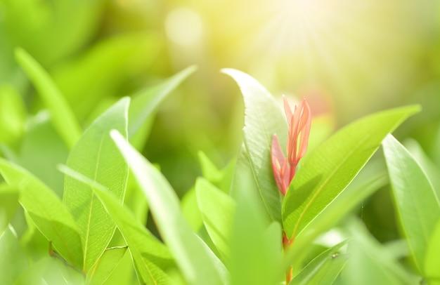 Nahaufnahmerot, -orang und -grün treiben im garten auf unscharfem hintergrund blätter