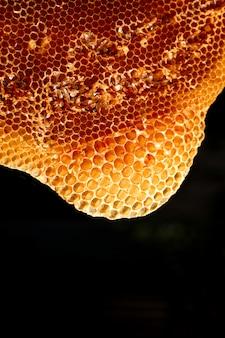 Nahaufnahmeschüsse der bienen, die in den honigzellen arbeiten