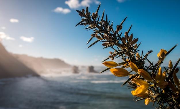 Nahaufnahmeschuss der gelben blüte auf einem baum und einem meer