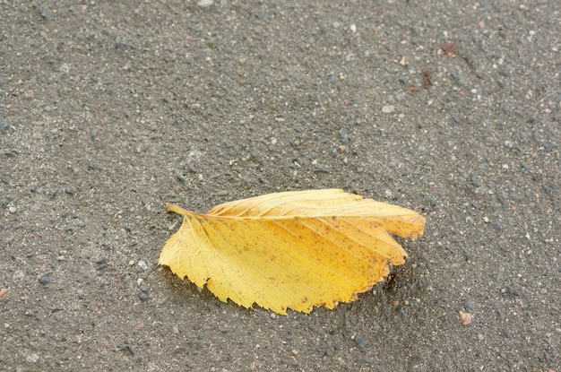 Nahaufnahmeschuss eines gelben blattes auf dem asphalt