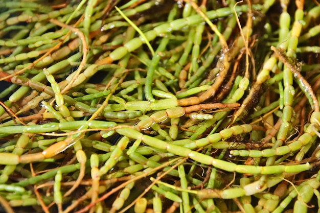 Nahaufnahmeschuss von grünen pflanzen auf dem boden in einem wald