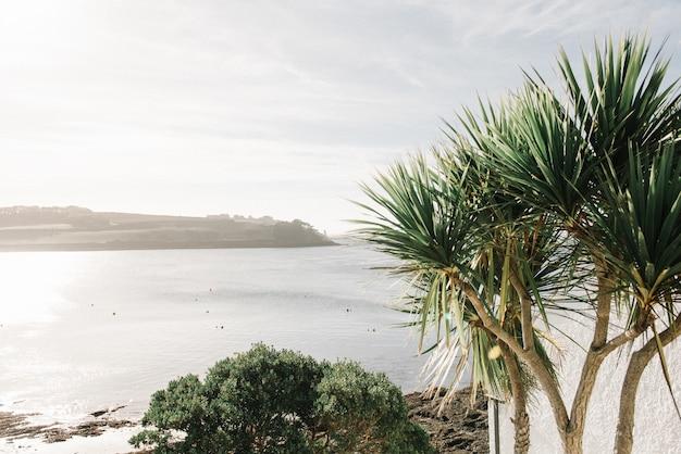 Nahaufnahmeschuss von tropischen pflanzen mit dem schönen meer