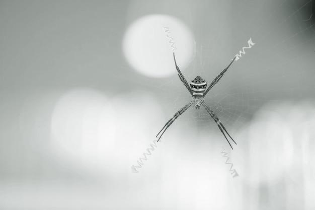 Nahaufnahmespinne auf spinnennetz