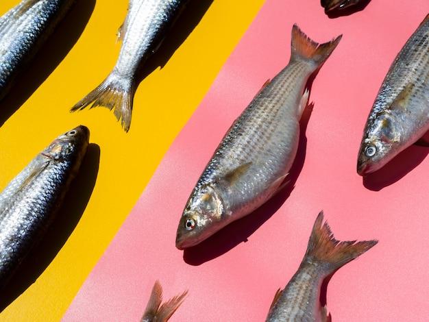 Nahaufnahmevielfalt von frischen fischen mit kiemen