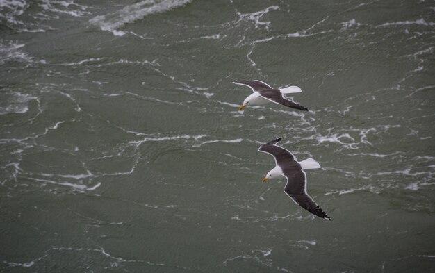 Nahes bild eines niederländischen mit federn versehenen vogels