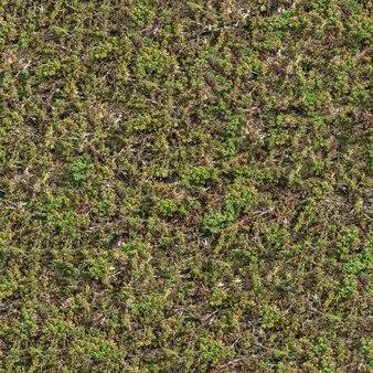 Nahtlose textur der steppe mit grünem gras und trockenen stielen