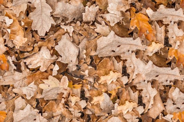 Nahtlose textur trockene eichenblatt herbstoberfläche