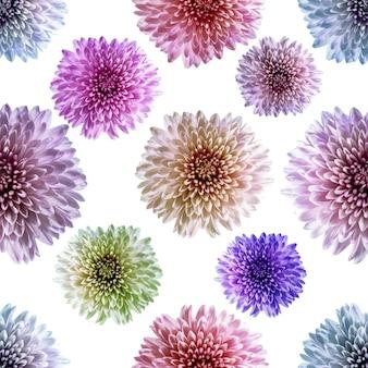 Nahtloses endloses muster mit bunten chrysanthemenblumen. blumenhintergrund. für gestaltung und druck. natürlicher chrysanthemenhintergrund. konzept für druck und design.