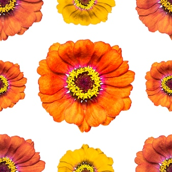 Nahtloses endloses muster mit mehrfarbigen zinniablumen. blumenhintergrund. für gestaltung und druck. natürlicher zinniumhintergrund. konzept für druck und design.