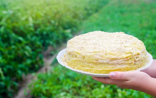 Napoleon-kuchen in weiblichen händen. süßes essen. frisch zubereitet. grüner hintergrund