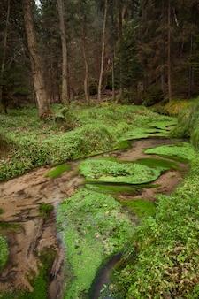Narrows trockener strom entlang im wald