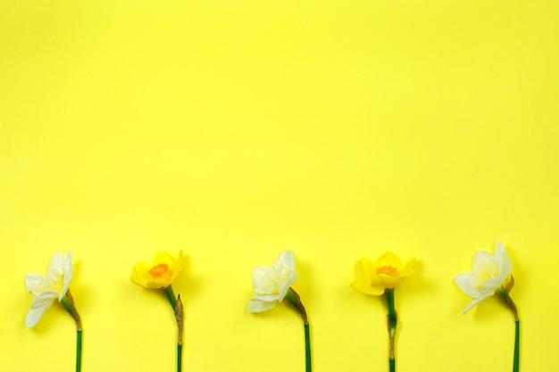 Narzissen auf gelb. gelbe frühlingsblumen.
