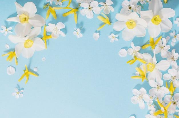 Narzissen und kirschblumen auf blauem oberflächenhintergrund