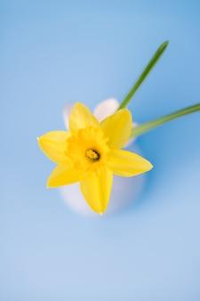 Narzissenblume in einer vase