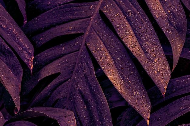 Nasse monstera deliciosa pflanzenblätter in einem garten