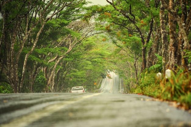 Nasse straße in der landschaft mit natur auf grünem berg nach regnerischem.