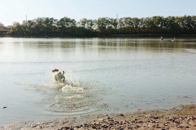 Nasser hund, der mit einer flasche auf dem sandigen ufer an einem sonnigen tag spielt