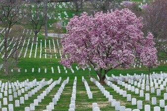 Nationalfriedhof Arlington mit schönen Cherry Blossom und Grabsteinen, Washington DC, USA