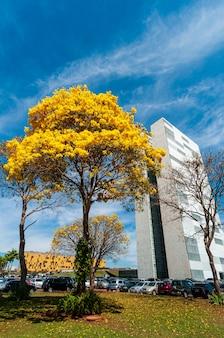 Nationalkongress mit blühenden gelben ipe-bäumen brasilia df brasilien am 14. august 2008