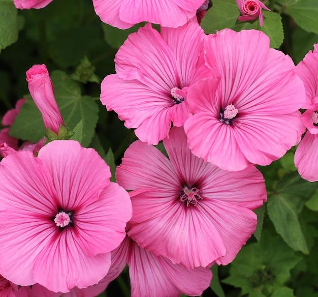 Natürlich mit rosa blüten und blättern