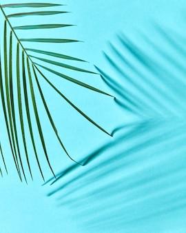 Natürliche anordnung eines grünen palmblattes auf einem blau mit einer kopie des raumes und der reflexion der schatten.