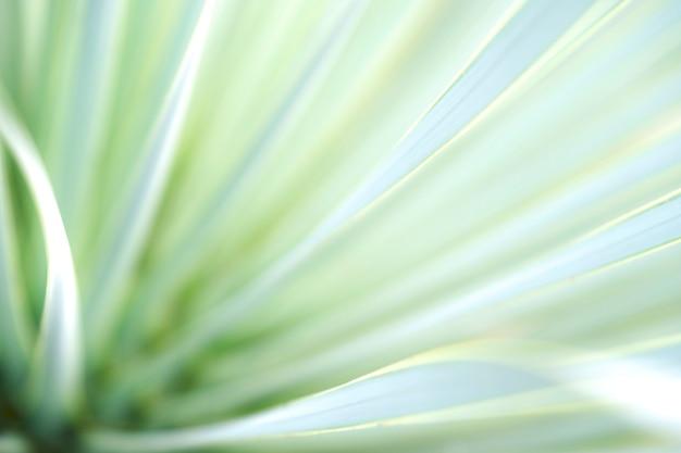 Natürliche ansicht des grünen blattes auf grün verwischte hintergrund im garten auf morgenzeit