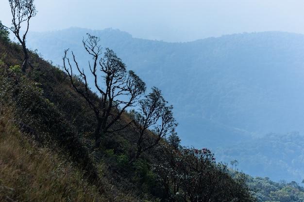 Natürliche ansichten und bäume bei kew mae pan