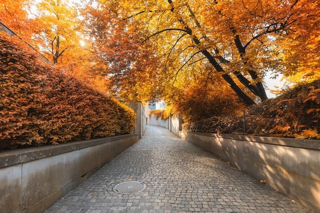 Natürliche bäume und gehweg am öffentlichen park im herbst, schöne malerische ansicht der gartenbaumpflanze im freien in der herbstsaison bei zürich city