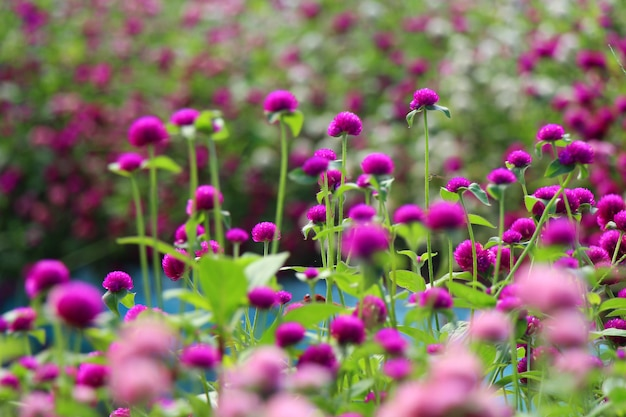 Natürliche bunte blumengarten-ansichtlandschaft
