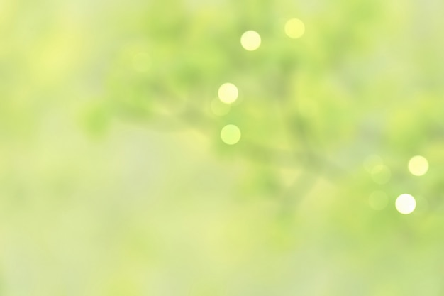 Natürliche defokussierte pastellgrünblätter