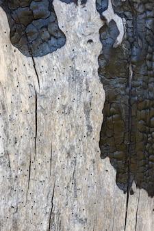 Natürliche gebrannte holzbretter. natürliche alte baumbeschaffenheit für hintergrund. verbranntes strukturiertes holz.