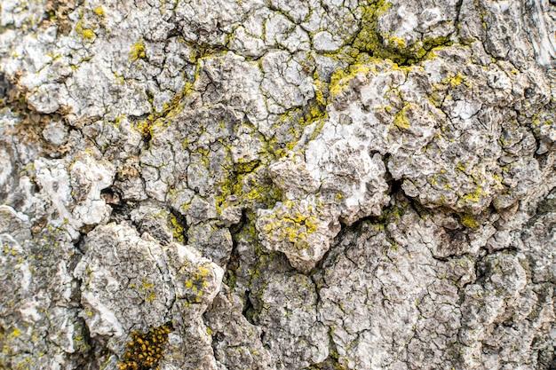 Natürliche graue alte baumrinde mit moos und flechten
