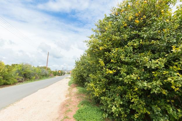Natürliche grüne bäume und büsche mit weg