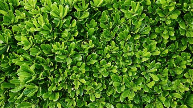 Natürliche grüne pflanzenblätter