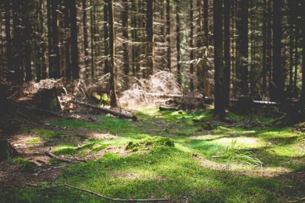 Natürliche grünen teppich