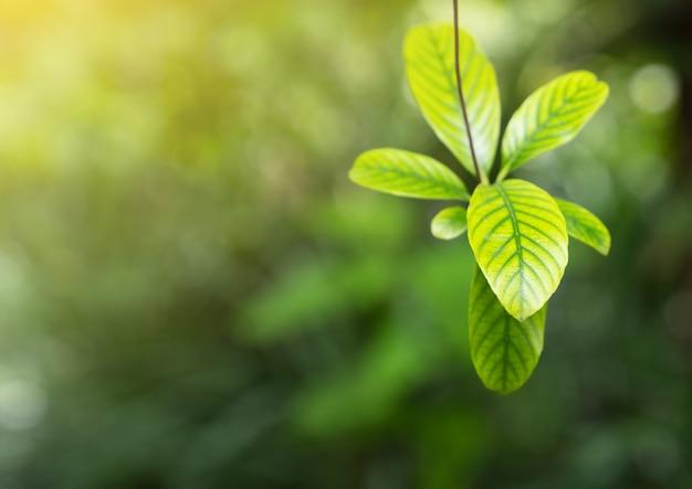 Natürliche grünpflanze im morgenlicht für frühlingshintergrund, frühjahr, grüne natur