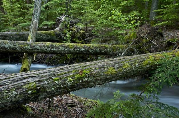 Natürliche holzbrücken