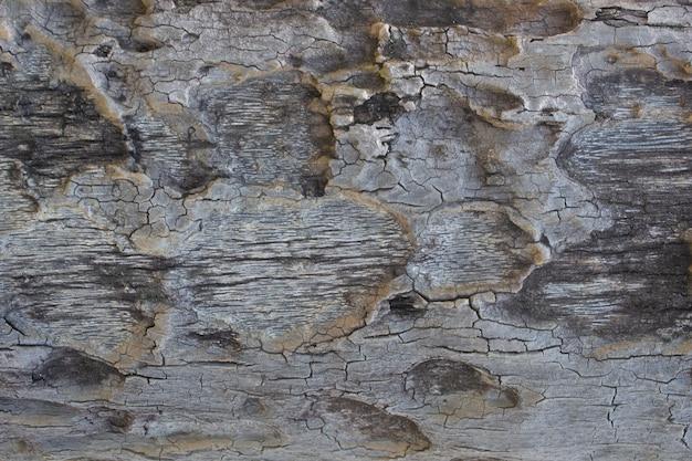 Natürliche holzstruktur mit natürlich gefärbten stücken