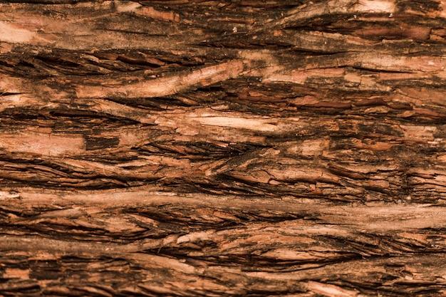 Natürliche horizontale waldbaumbeschaffenheit