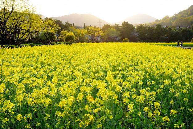 Natürliche landschaft mit blumen in voller blüte