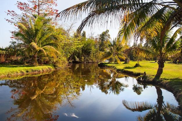 Natürliche palmen wachsen am ufer eines teiches. kuba.